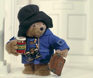 Chi è l orso più bello del mondo gigi il giornale dei giovani